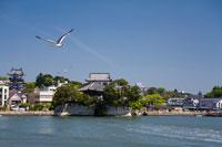 松島 五大堂とウミネコ