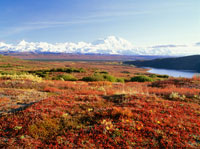 晩秋のマッキンリー山 デナリ国立公園 25630000089  写真素材・ストックフォト・画像・イラスト素材 アマナイメージズ