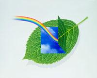緑の葉に虹