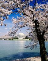 春のジェファーソン記念館
