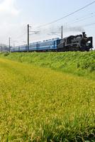 北陸本線のC56牽引SL北びわこ号
