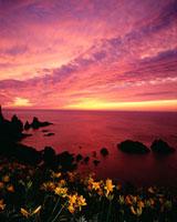 大野亀のカンゾウと夕日
