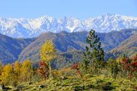 新雪北アルプスと紅葉の山