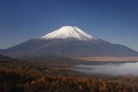 カラマツの黄葉と富士山
