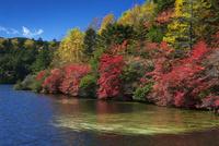 紅葉の白駒池 25709012927  写真素材・ストックフォト・画像・イラスト素材 アマナイメージズ