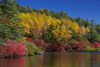 紅葉の白駒池 25709012956  写真素材・ストックフォト・画像・イラスト素材 アマナイメージズ