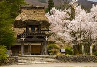白川郷 満開の桜と萩町合掌造り明善寺
