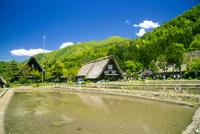 世界文化遺産白川郷 春の水田と合掌造り集落