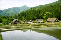 世界文化遺産 水田と白川郷合掌造り集落