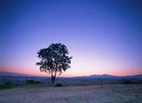 朝焼けと木