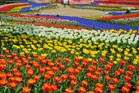 春の木曽三川公園