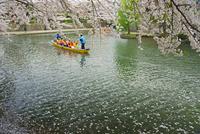 春の水門川と観光船 25747018614| 写真素材・ストックフォト・画像・イラスト素材|アマナイメージズ