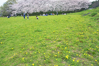 春の石舞台・芝生広場