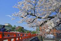 春の高山中橋                25747020624| 写真素材・ストックフォト・画像・イラスト素材|アマナイメージズ