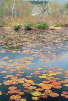 春のいもり池