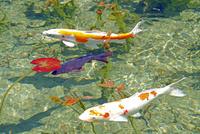 根道神社の池  25747021285| 写真素材・ストックフォト・画像・イラスト素材|アマナイメージズ