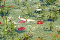 根道神社の池  25747021287| 写真素材・ストックフォト・画像・イラスト素材|アマナイメージズ
