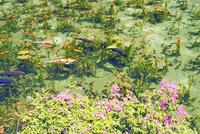 根道神社の池  25747021290| 写真素材・ストックフォト・画像・イラスト素材|アマナイメージズ