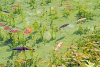根道神社の池  25747021292| 写真素材・ストックフォト・画像・イラスト素材|アマナイメージズ