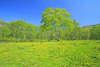 新緑の笹ケ峰牧場                   25747021422| 写真素材・ストックフォト・画像・イラスト素材|アマナイメージズ