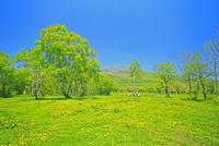 新緑の笹ケ峰牧場と三田原山                    25747021433| 写真素材・ストックフォト・画像・イラスト素材|アマナイメージズ