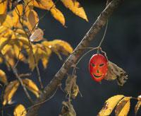 カラスウリのお化け 25761002559| 写真素材・ストックフォト・画像・イラスト素材|アマナイメージズ