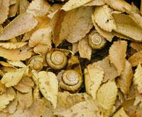 カタツムリの越冬
