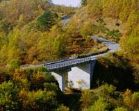クヌギ林と道 25778014895| 写真素材・ストックフォト・画像・イラスト素材|アマナイメージズ