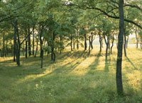 クヌギ林のこもれ日 25778016520| 写真素材・ストックフォト・画像・イラスト素材|アマナイメージズ