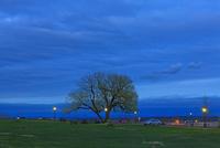 夕暮れの一本の木
