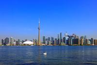 オンタリオ湖の白鳥と高層ビル群