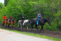 乗馬の練習 25801014713| 写真素材・ストックフォト・画像・イラスト素材|アマナイメージズ