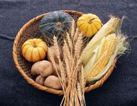 収穫期の食材 25802008278| 写真素材・ストックフォト・画像・イラスト素材|アマナイメージズ