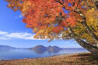 洞爺湖と紅葉 25802014089| 写真素材・ストックフォト・画像・イラスト素材|アマナイメージズ