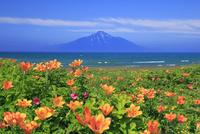 花畑と利尻山