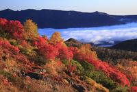 銀泉台の紅葉と雲海