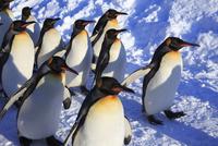 旭山動物園 25802014682| 写真素材・ストックフォト・画像・イラスト素材|アマナイメージズ