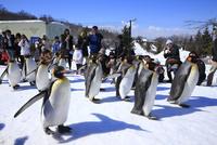旭山動物園 25802014690| 写真素材・ストックフォト・画像・イラスト素材|アマナイメージズ