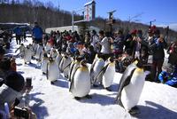 旭山動物園 25802014691| 写真素材・ストックフォト・画像・イラスト素材|アマナイメージズ