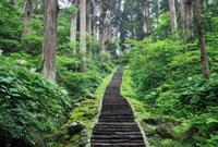 羽黒山の石段 出羽三山神社