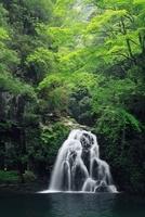 新緑の千手滝 赤目四十八滝
