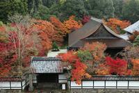 南禅寺三門からの天寿庵と紅葉