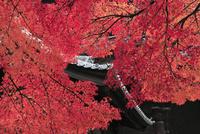 南禅寺三門と紅葉