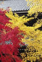 南禅寺法堂と紅葉