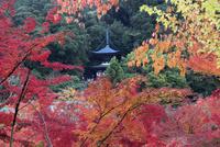 永観堂の多宝塔と紅葉