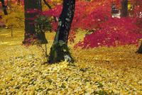 永観堂の紅葉 25805015783| 写真素材・ストックフォト・画像・イラスト素材|アマナイメージズ