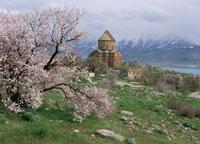 アルメニア教会とアーモンドの花