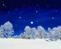 冬の夜空 樹林