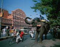 風の宮殿とゾウ 1月    ジャイプール インド 25826022099| 写真素材・ストックフォト・画像・イラスト素材|アマナイメージズ