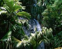 ヴァレ・ド・メ国立公園の滝2月 セーシェル